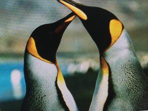 sgrassatore ldc pinguini puliti