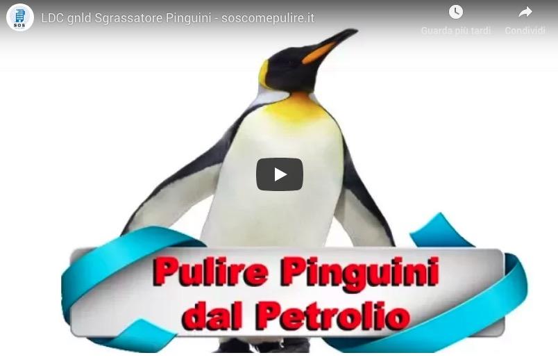 [INCREDIBILE] I prodotti GNLD per l'ambiente: puliscono i pinguini dal petrolio